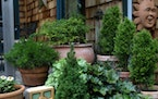 Bob Sauer built stone walls rock by rock and established a 1-acre garden that include a conifer collection, dozens of hostas and daylillies that he hy