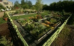 In five growing seasons, Sarah Buerkley has transformed her Stillwater landscape into a series of gardens that cover about 2 acres of an 11-acre yard.