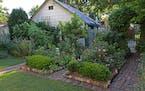 "Boxwood shrubs surround raised beds of hybrid tea and shrub roses in Kate Podobinski's Minneapolis garden. ""The fragrance reminds me of my grandma's g"