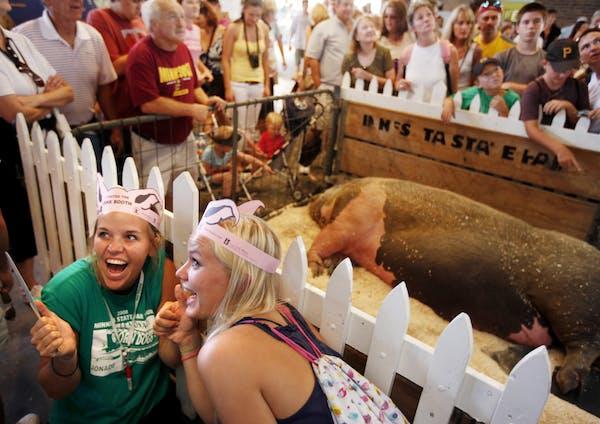 The swine barn at the Minnesota State Fair