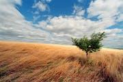 Health care: A prairie vision