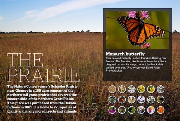 The Vanishing Prairie: A closer look