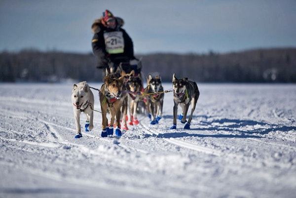 The John Beargrease sled dog race has been postponed until March.