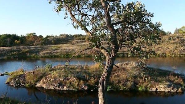 Climate change may turn BWCA into Oak Savanna