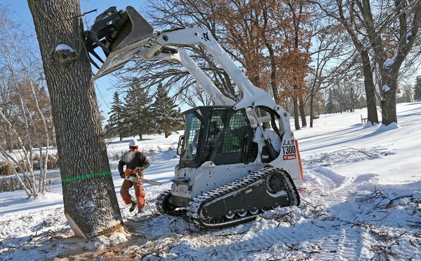 After Douglas Moberg made final cuts, a skid loader pushed over an ash tree at the city's Gross National Golf Club. Crews will remove 92 trees there