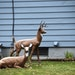 An ongoing dispute between neighbors over feeding deer erupted in gunfire Monday night in New Brighton. One man is dead, another victim is hospitalize