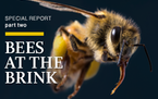 Special report: Bees at the Brink