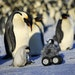 A remote-controlled roving camera was disguised as a fluffy penguin chick in Antarctica.