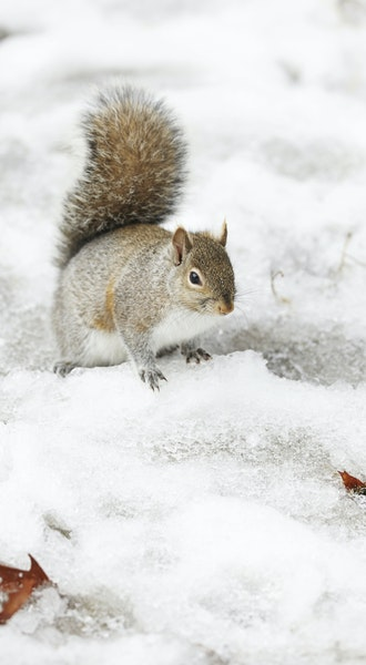 Squirrel hunting: A pitch for an unpopular sport