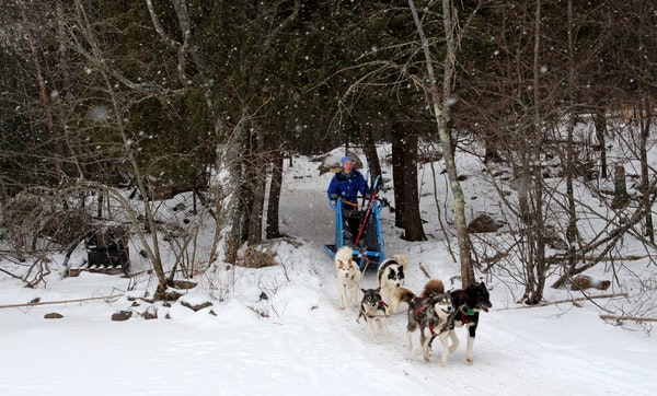 Paulsen steered a team of dogs through the woods near the main lodge of Wintergreen Dogsled Lodge. The outfitter, in business for a quarter-century, s