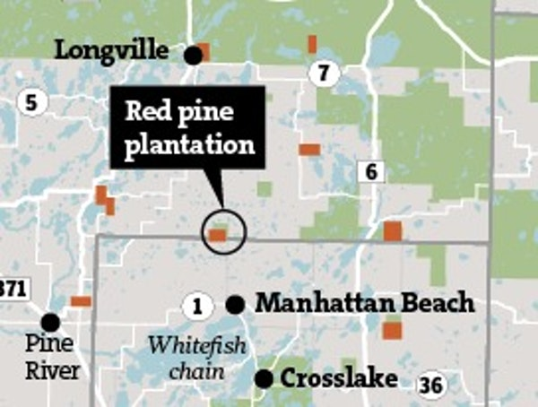 Clear-cutting red pine plantations in Minnesota