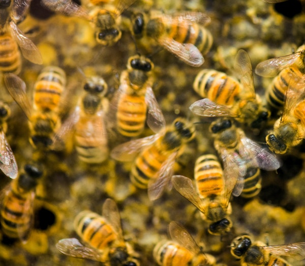A hive of honeybees