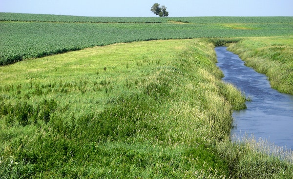 A scene from Redwood County shows the sort of grass buffer strip sought by Gov. Mark Dayton. Dayton has told legislators he wants buffers included in