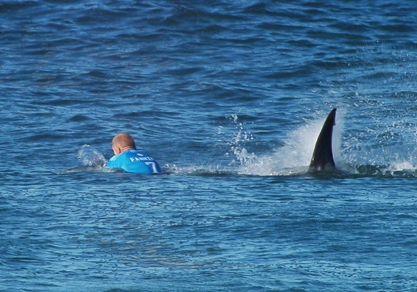 Surfer fights off shark during competition