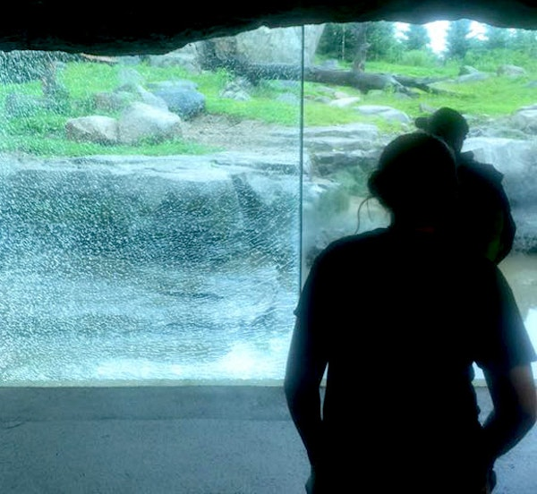 This pane of glass at the Minnesota Zoo was shattered Monday but remained in place after a bear slammed a rock against it several times.