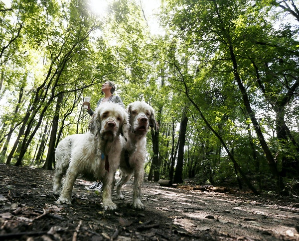 Amy Schmitz walked her Clumber Spaniels Ernie, left and Penny on a 15-acre parcel of land located at 40th Street and France Avenue S. straddling the b