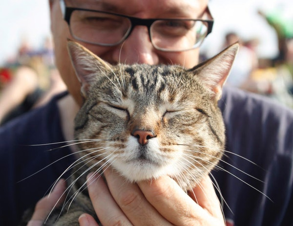 In 2014, Peter Pasquale attended the Internet Cat Festival at Walker Art Center with his better half, Jack, a tabby mix.