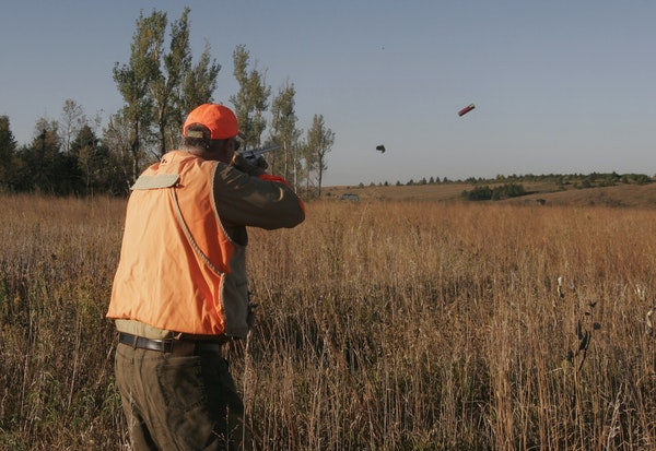 Hunters had fewer pheasants to shoot at last fall as the pheasant index said there were just 29 per 100 miles, but this year that ratio is up to 41 pe