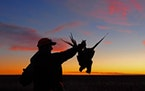 North Dakota pheasants are up 30 percent