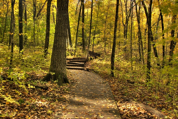 Hiking trail at Nerstrand Big Woods State Park.