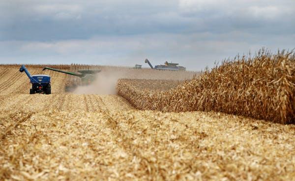 The Peterson family operates Far-Gaze Farms near Northfield, Minn. The farm's corn harvest was underway Friday.