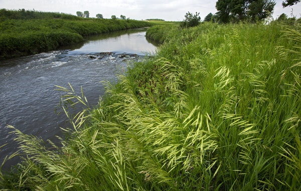 A buffer strip of grass and trees along the Rock River west of Edgerton, Minn. Gov. Mark Dayton, battling House Republicans, retreated from a controve