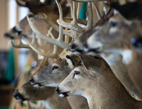 The former Minnesota Deer Classic was a big-buck bonanza for those attending.