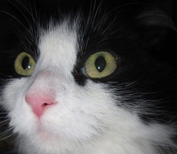 Cowkitty died from a fire Sunday in a downtown Minneapolis apartment building.