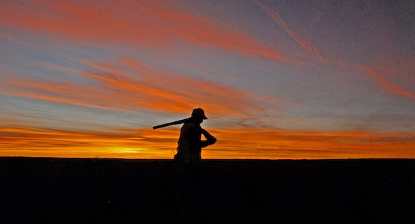As the sun sets on another South Dakota pheasant-hunting season (it runs through Jan. 1), state wildlife officials are reporting a 5-percent decrease