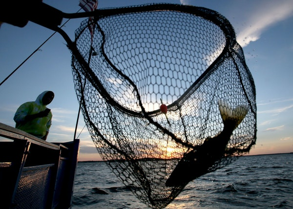 Walleye fishing has been stopped early two years in a row on Mille Lacs.