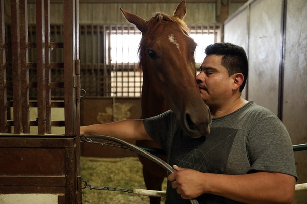 Alejandro Michel, who is working on a H-2B visa, grooms horses in Valorie Lund's barn at Canterbury Park.
