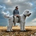 Chris Cline has made his dog Juji the doodle a global star via his Instagram account, @christophercline.