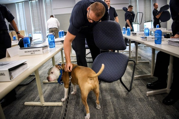 Minneapolis police recruits petted Wilbur at the end of class.