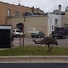 Dork the emu, who escaped from owner Tom Berry's home in nearby Becker in early summer, had become a celebrity of sorts on Facebook.