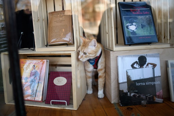 Max explored the window display at Against the Current bookstore in St. Paul.