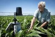 Wally Parkins, owner of Royal Farms in Royalton, Minn., showed off a soil probe he is experimenting with to monitor nitrate usage on his corn crop in