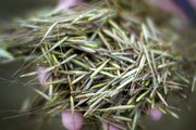 Wild rice grows exclusively in some parts of the Great Lakes States, primarily Minnesota.