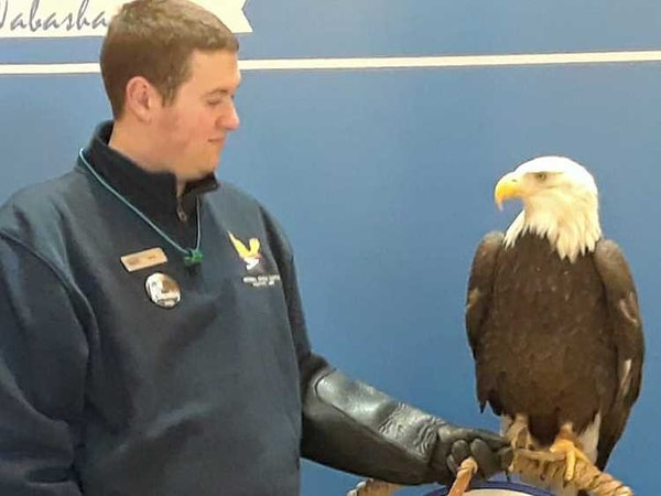 Jarod Lueck, avian care assistant manager at the Eagle Center, watches Angel, an 18-year-old female eagle that has been with the National Eagle Center