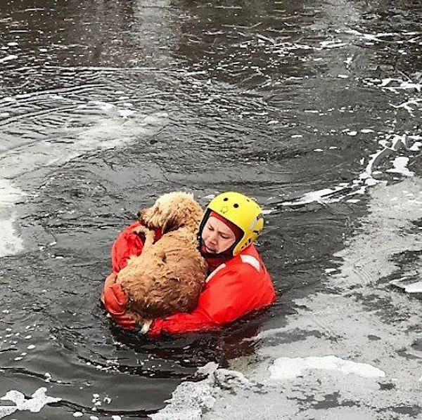 Volunteer Bloomington firefighters Robby Smith huddled a dog in upper Penn Lake near Haeg Park as he ferried it to safety Wednesday.