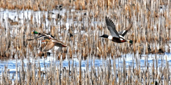 Passage of the Wetland Conservation Act preceded the establishment of the Wetlands Bank, which encourages landowners committed to conservation to rest
