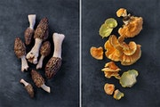 Morels and chicken of the woods.