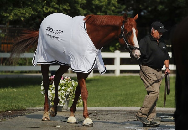 Triple Crown hopeful Justify is led out of the stable for a bath after a workout at Belmont Park, Friday, June 8, 2018, in Elmont, N.Y. Justify will a
