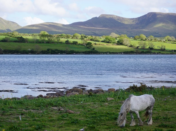 A horse grazes in the village of Cloghane on the Dingle Peninsula.