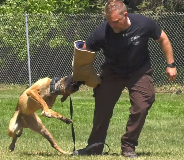 Nineteen dogs and their human partners from area police departments graduated from K-9 training in May. Suspect apprehension was demonstrated at the e
