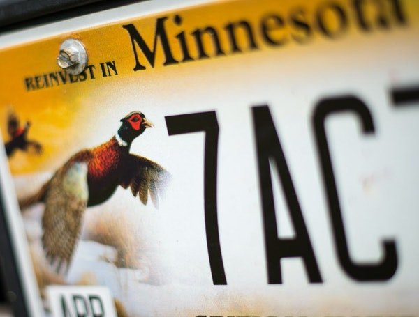 Minnesota has been home to pheasants for about 100 years. But the birds have struggled recently because of a loss of grasslands.