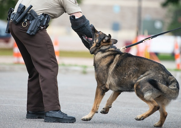 An officer does a demonstration with a dog.