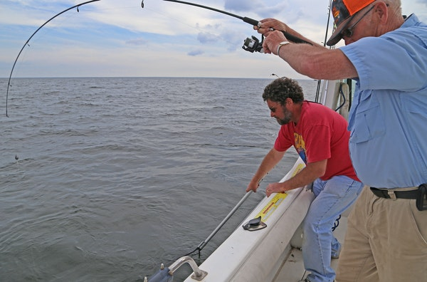 Mike Giefer, left, of Woodbury, prepares to net a walleye on Mille Lacs for Robbie Robinson. Robinson runs a launch and other guide boats out of Fishe