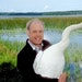 Carrol Henderson, who will retire soon from the DNR, was responsible for the largest release ever of trumpeter swans into the wild during his tenure a