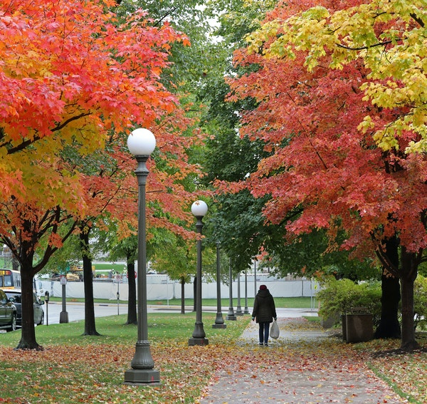 A woman walked through a canopy of beautiful fall leaves toward the Minnesota State Capitol after a morning rain.