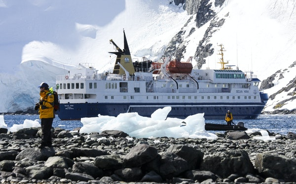 Smaller ships carrying 100-200 passengers give Antarctic visitors more time ashore. Emperor penguins are 3 feet tall, the largest of penguins. Small s
